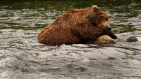 Sleeping Bear, Katmai N.P.