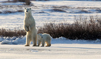 Standing Mother and Cub