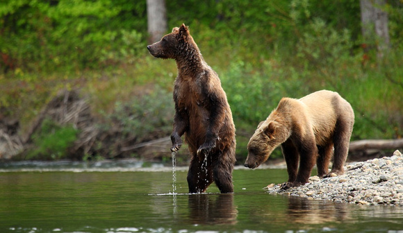 Brady and Cub, British Columbia
