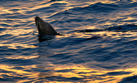 Sealion Sunset